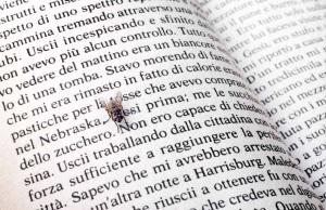 gianni pezzani, mouches à lire . kerouac, 2013